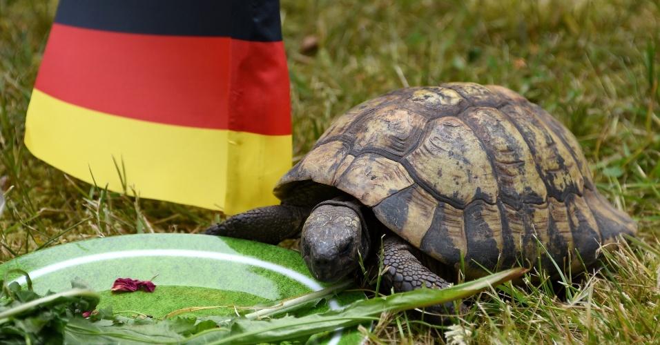 """16.jun.2014 - Pequena tartaruga foi apelidada de """"Momário"""" na Alemanha. Ela é responsável por dizer se a seleção do país vai ganhar ou perder os seus jogos"""