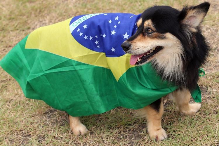 Até cachorro aparece com bandeira brasileira no Castelão para o jogo desta terça