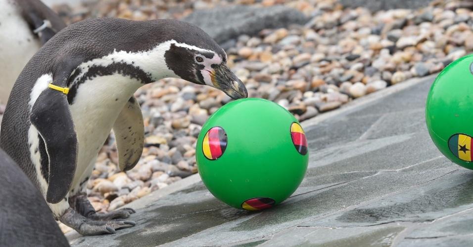 Don Juan, o pinguim vidente, escolhe a bola da Alemanha e aponta o país como vencedor no duelo contra Gana
