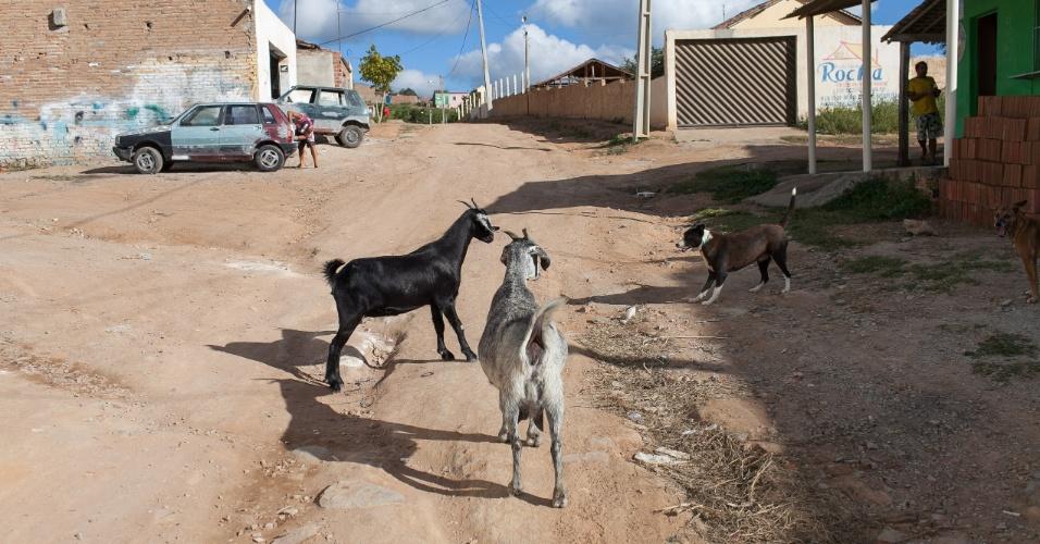 Cabras brincam com cachorro na rua da casa de José Paulo Bezerra Maciel, pai do jogador Paulinho, meia da seleção brasileira, minutos antes do incio da partida do Brasil contra o Mexico, em Pesqueira no interior do Pernambuco