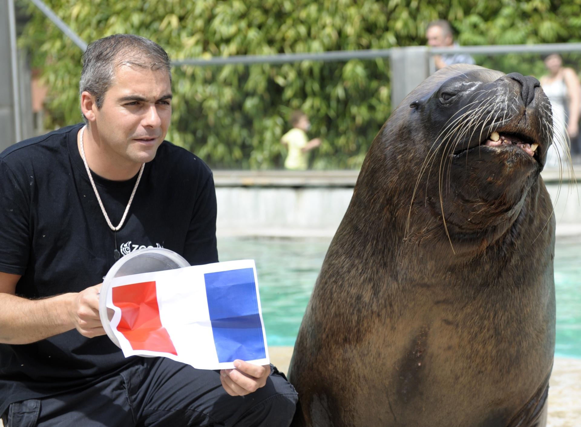 Watson é um leão-marinho vidente e apontou a França como vencedora da partida contra o Equador