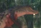 Animais selvagens usados para tirar trocado de gringos em Manaus - Felipe Pereira
