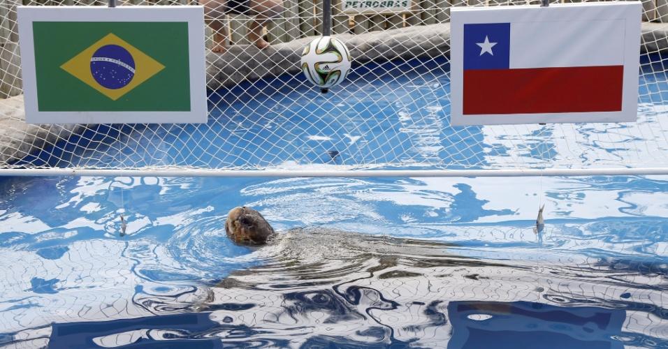 Cabeção, uma tartaruga-marinha vidente, escolheu o Brasil como vencedor para a partida contra o Chile