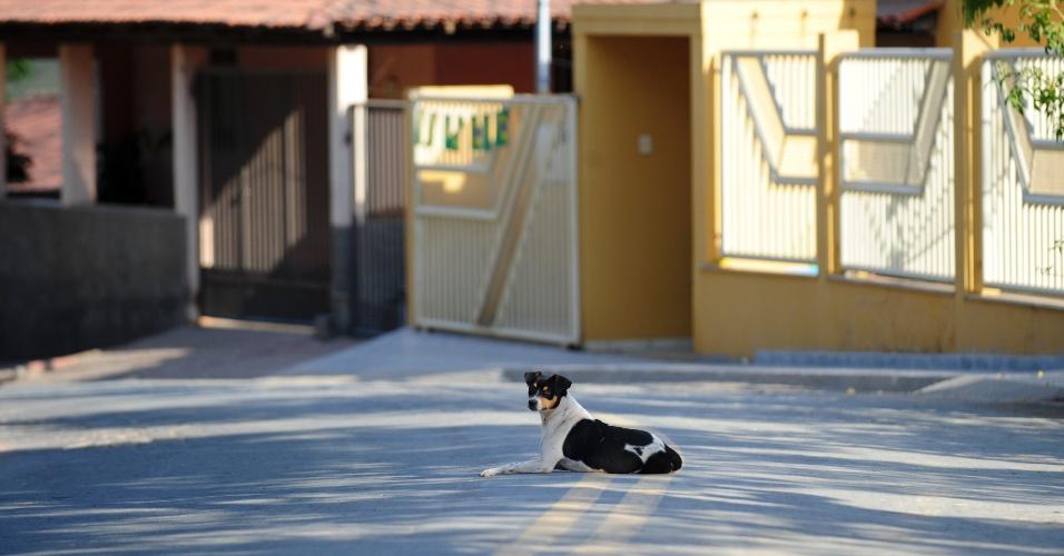 Cachorro repousa na rua principal da menor cidade do país, no interior de Minas Gerais