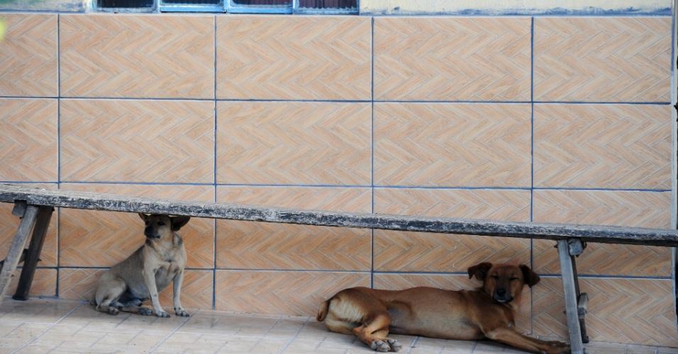 Cachorros descansam na tarde pacata de Serra da Saudade, cidade considerada a menor do país em número de habitantes