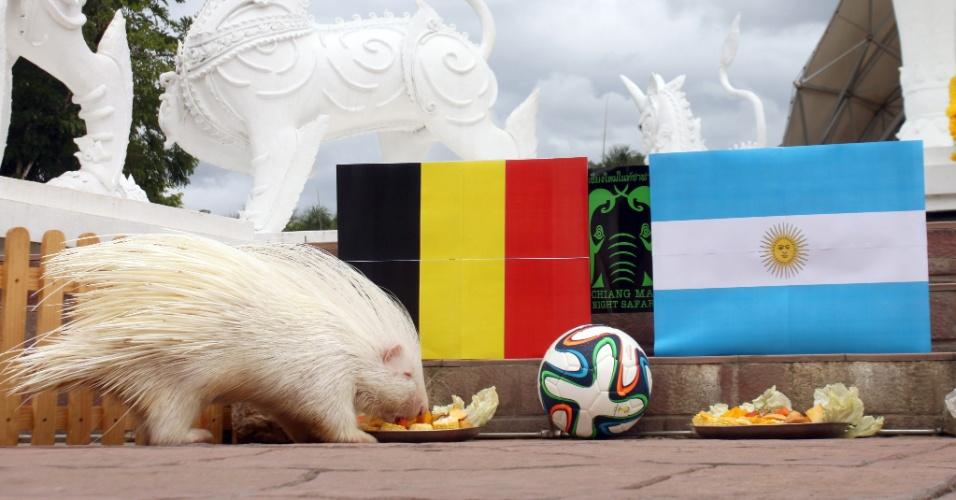 O porco-espinho albino Little pode não ser mais famoso que o personagem dos games Sonic, da mesma espécie, mas caso acerte a previsão feita em um zoológico na Tailândia e a Bélgica elimine a Argentina ganhará uma legião de fãs, especialmente aqui no Brasil