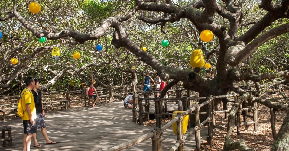 O cajueiro de Pirangi recebeu decoração especial para a Copa do Mundo no Brasil.