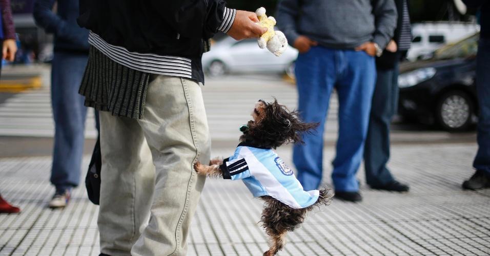 Cachorro usa uniforme da Argentina enquanto brinca com seu dono nas ruas de Buenos Aires