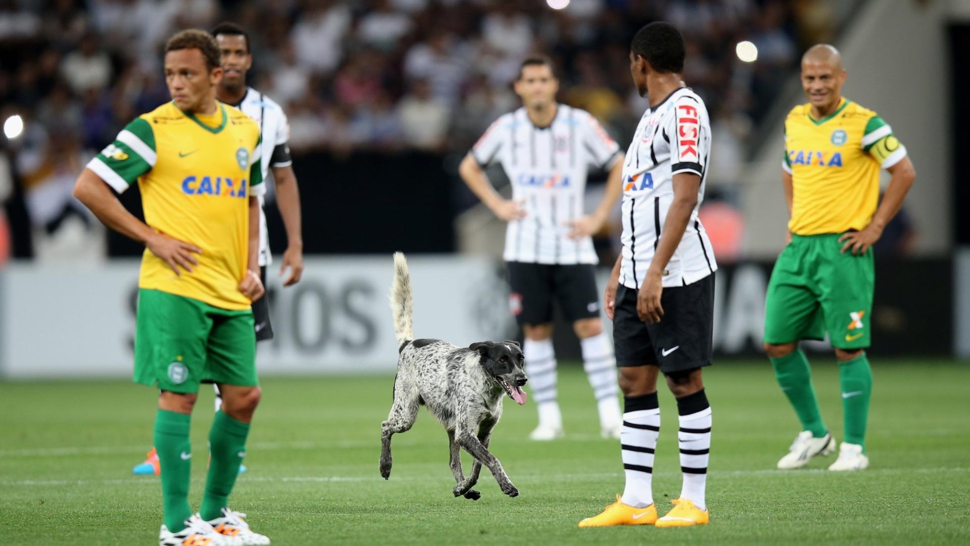 Cachorro invade gramado na partida entre Corinthians e Coritiba