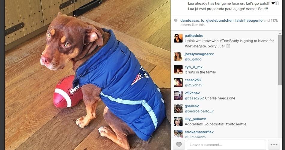"""Até a cadela da família tem acessórios dos Patriots: """"Lua já está preparada para o jogo! Vamos Pats!!!"""""""