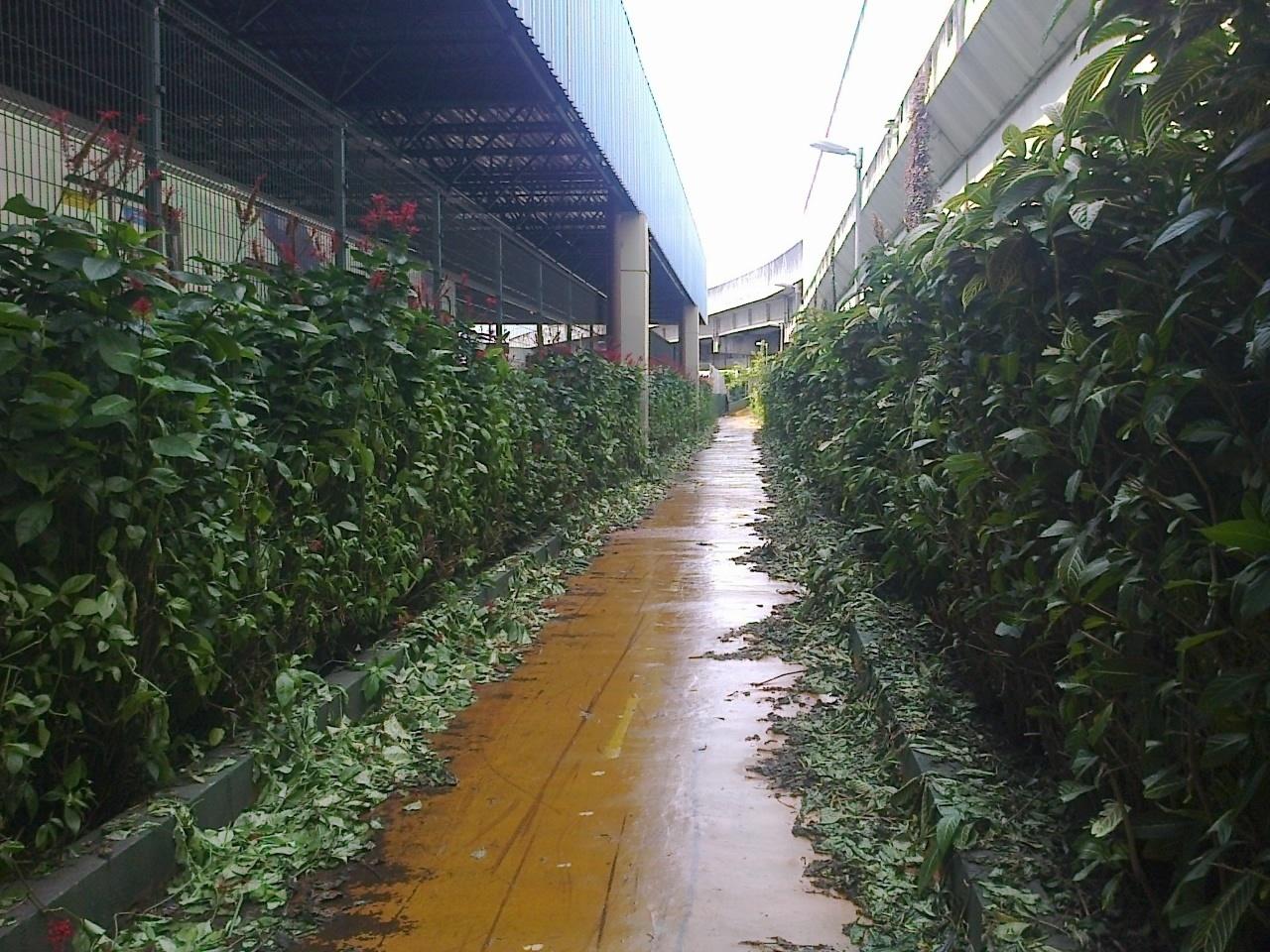 Apesar da vegetação que invade a pista, ciclovia está em bom estado de conservação