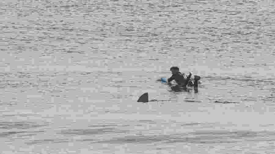 Surfista Devon Zimmerman vê tubarão em mar e fica paralisado na prancha - Joe Mault/Orleans Camera
