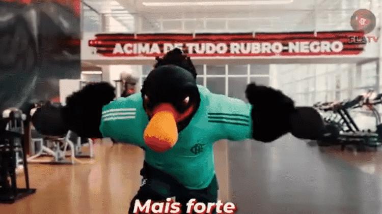 Mascote do Flamengo - Reprodução/Twitter - Reprodução/Twitter