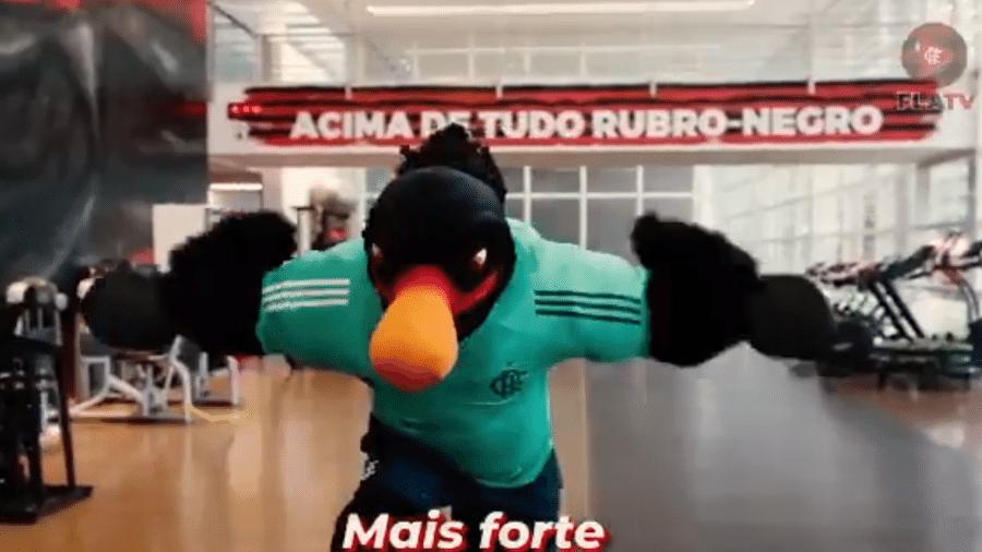 Novo mascote do Flamengo faz musculação - Reprodução/Twitter