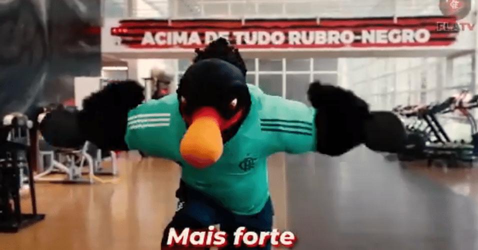 Novo mascote do Flamengo faz musculação