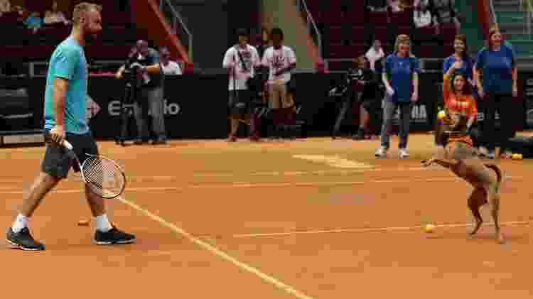 Cães ajudam tenistas no Brasil Open de Tênis - Marcelo Zambrana/DGW Comunicação - Marcelo Zambrana/DGW Comunicação
