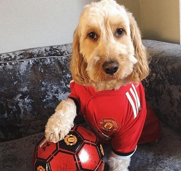 Até eles torcem para o Manchester United!