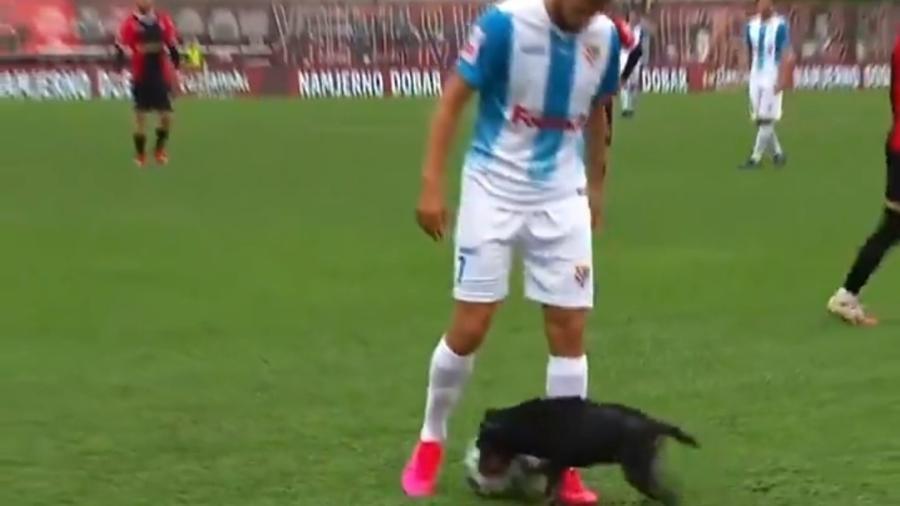 Cachorro interrompe jogo na Bósnia e dribla jogadores - Reprodução/Twitter