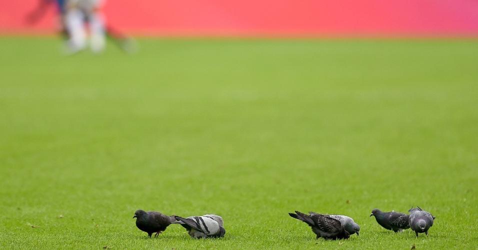 10.jan.2016 - Pombas passeiam tranquilamente pelo gramado durante a partida entre Internazionale e Sassuolo pelo Campeonato Italiano