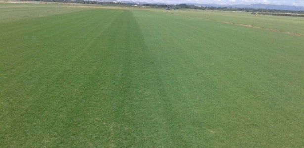 Nova grama está plantada em uma fazenda na cidade de Taubaté - Reprodução