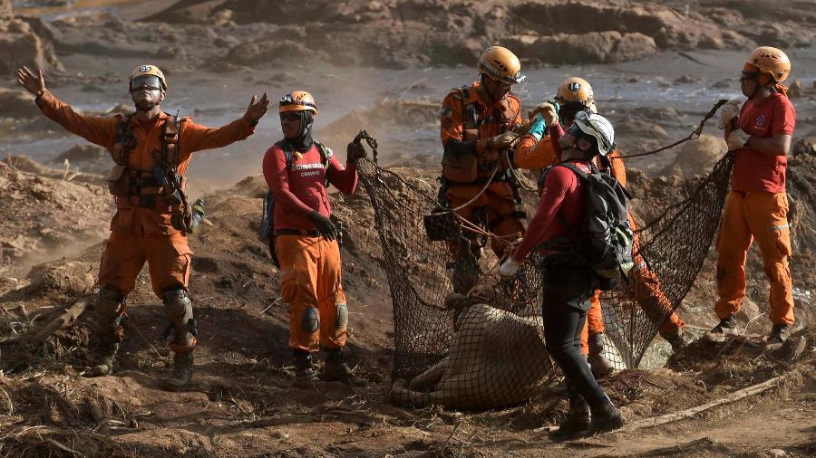 Bombeiros resgatam animal em Brumadinho - Washington Alves/Reuters