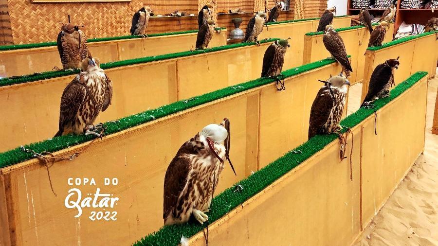 Falcão à venda no Mercado dos Falcões de Doha, ao lado do Souq Waqif - Tiago Leme
