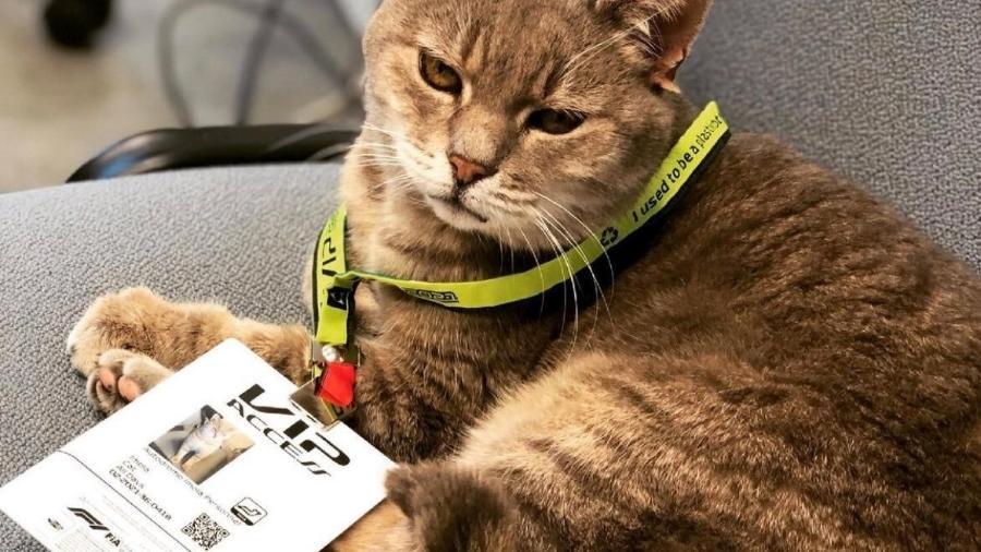 o gato Formulino ficou famoso no paddock da F1 em Imola - Reprodução