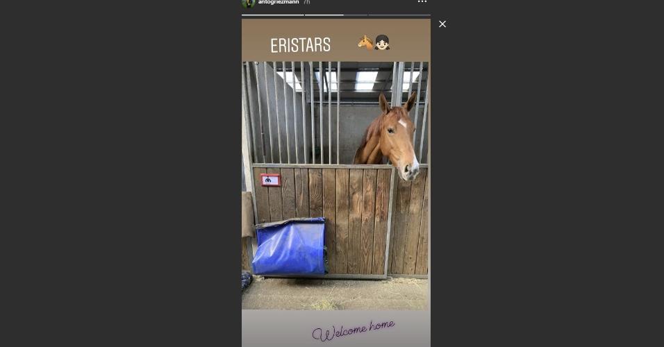 Cavalos Antoine Griezmann