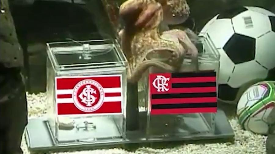 Flamengo provoca Inter com polvo Paul, profeta da Copa de 2010 - Reprodução/Twitter