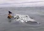 Surfista salva baleia em resgate de 3 horas usando faca e tesoura; assista - Reprodução
