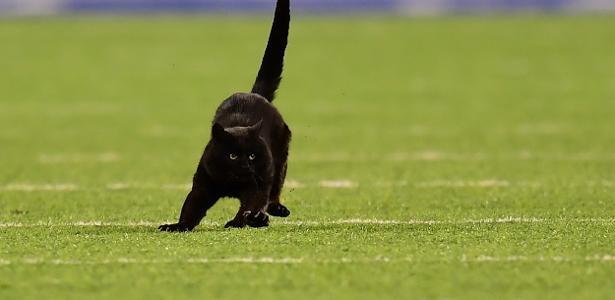 Futebol americano | Gato invade campo em jogo da NFL e ganha narração de touchdown