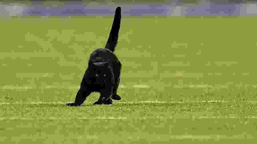 Gato preto invade campo durante New York Giants x Dallas Cowboys - Emilee Chinn/Getty Images/AFP