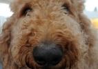 Cães terapeutas continuam em ação no Pan. E ajudam até quem já levou ouro - Eva HAMBACH/AFP