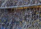 Boca Juniors pretende fazer treino aberto antes de final contra o River - Alejandro Pagni/AFP