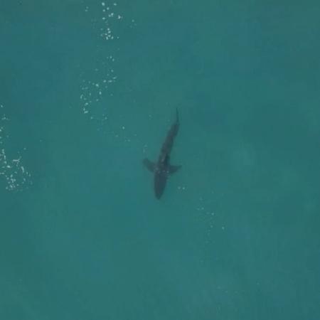 Tubarão aparece durante bateria Fanning x Medina em Jeffreys Bay - Reprodução