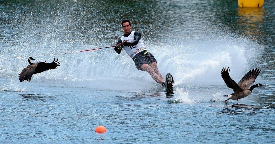 Ganso tentam fugir do chileno Felipe Miranda e seu esqui aquático durante a prova do slalom masculino