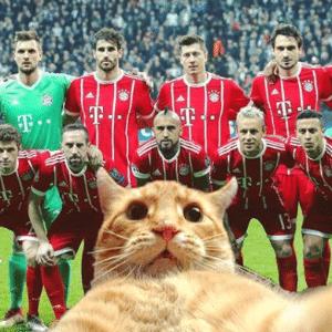 O gato invasor tira 'selfie' com os jogadores do Bayern de Munique