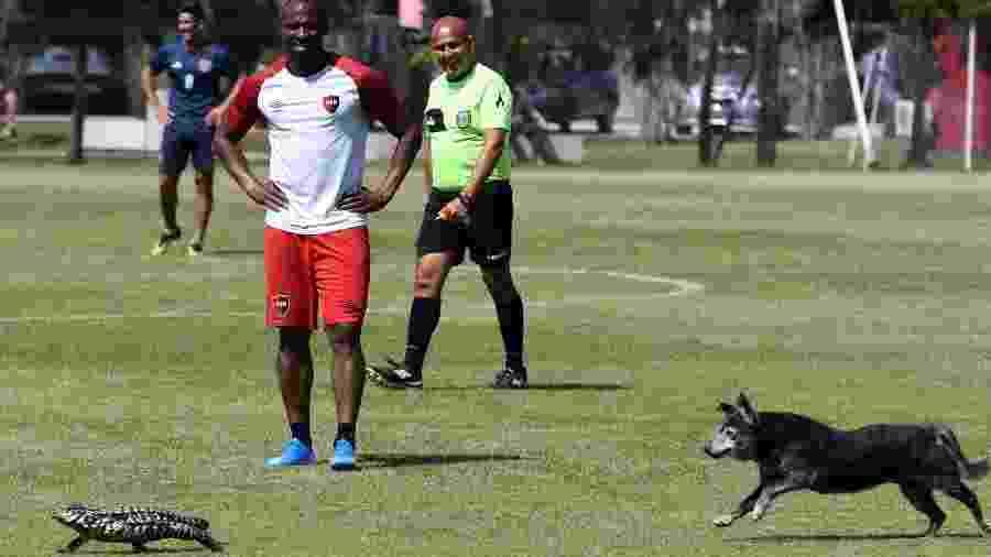 """Iguana e cachorro invadem jogo amistoso de Newell""""s Old Boys  - Divulgação/Newell""""s Old Boys"""