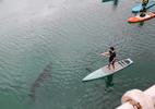 Assustador! Tubarão-elefante interrompe aula de stand-up paddle; assista - Reprodução/YouTube/SWNS