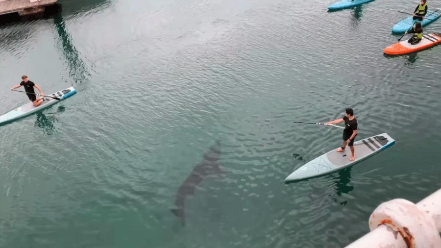 Tubarão passando entre os praticantes de stand-up paddle - Reprodução/YouTube/SWNS