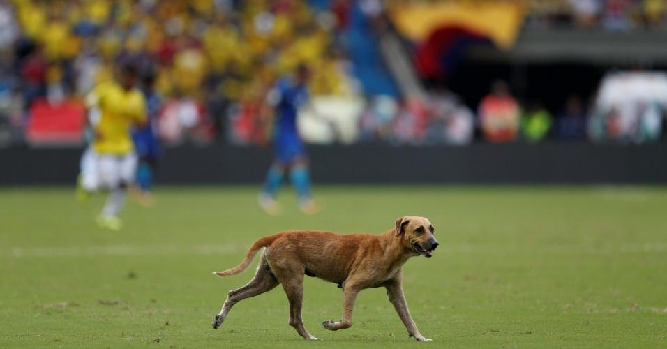 Cachorro invade campo durante Colômbia e Brasil pelas Eliminatórias