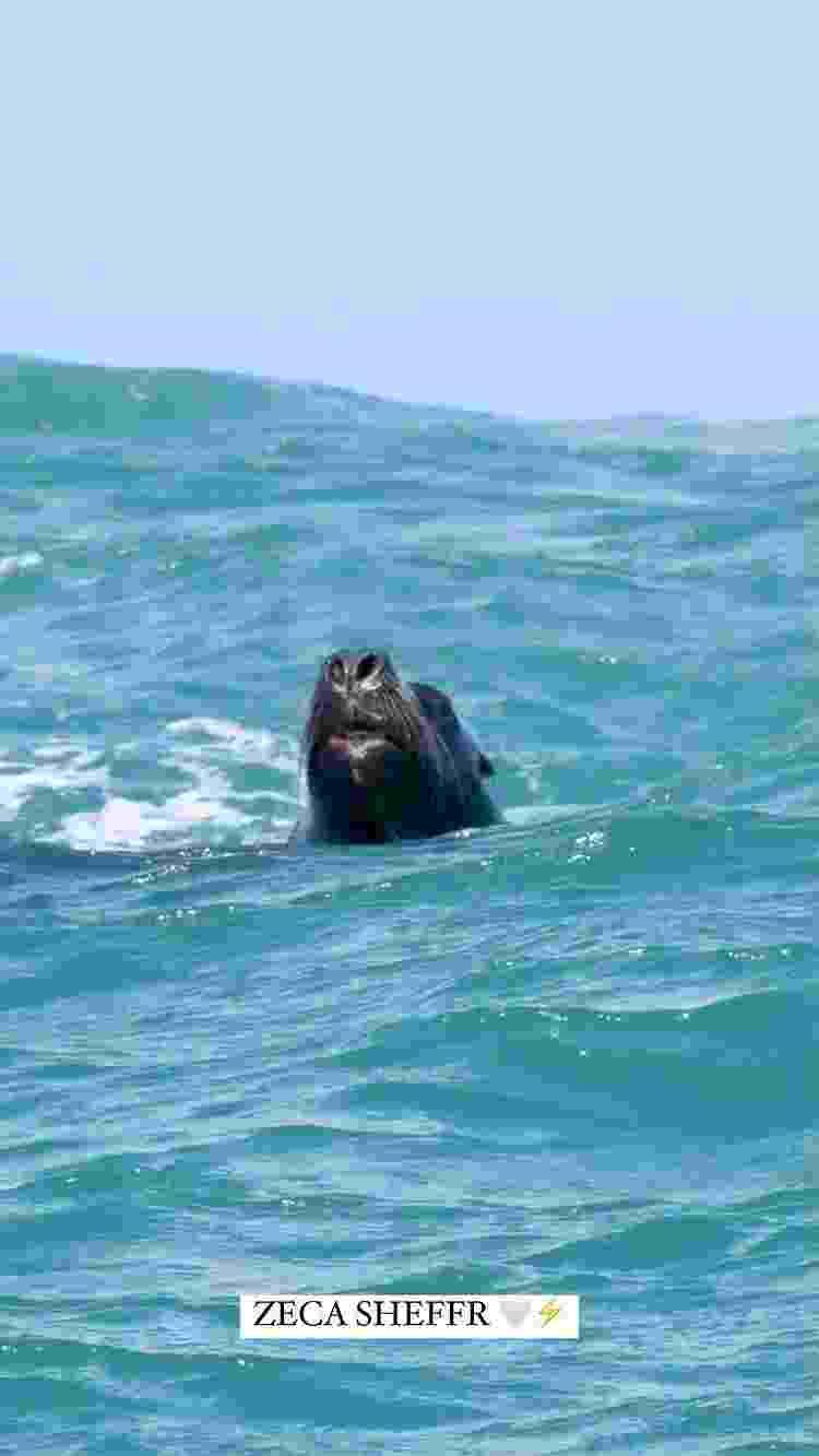 Italo Ferreira posta foto de leão marinho durante treino em Santa Catarina - Instagram - Instagram