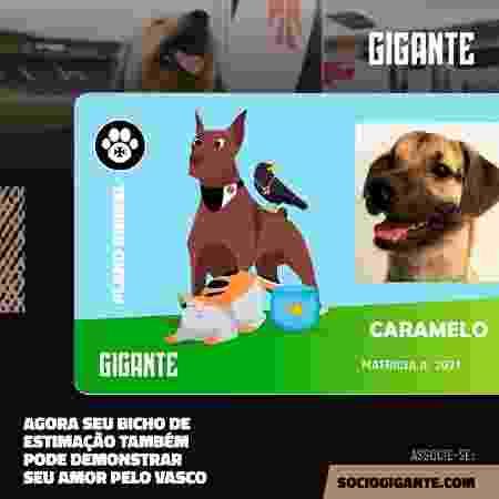 Novo programa de sócio-torcedor do Vasco tem plano para pets - Divulgação / Vasco - Divulgação / Vasco