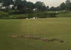 Píton aparece e interrompe torneio de golfe na Malásia - Reprodução TwitterPGA