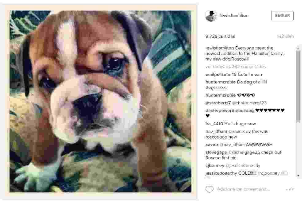 O bulldog Roscoe chegou assim à família Hamilton em 2013 - Reprodução/Instagram