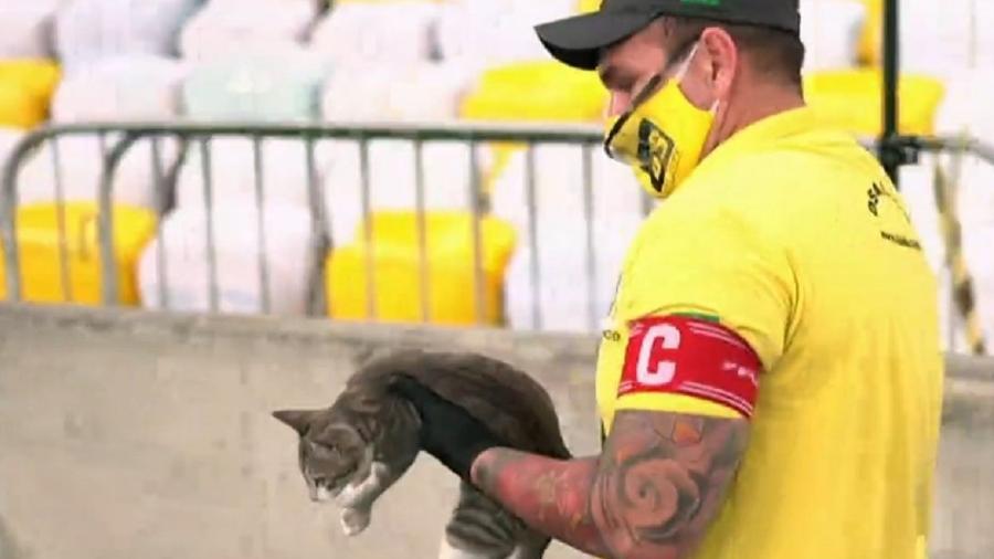 Gato rouba a cena durante o jogo entre Flamengo e Grêmio, pela Copa do Brasil - Reprodução
