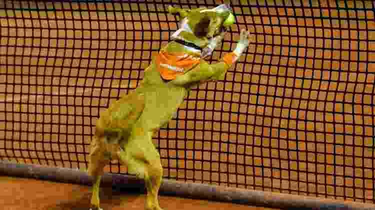 """Cães viram """"cãodulas"""" no Brasil Open de Tênis - Alexandre Carvalho/DGW Comunicação - Alexandre Carvalho/DGW Comunicação"""