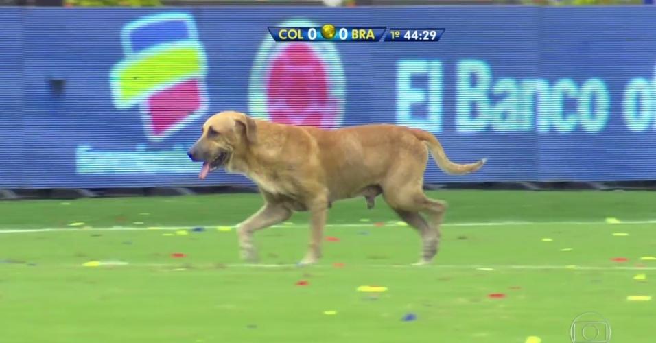 Cachorro invade gramado e paralisa jogo entre Brasil e Colômbia