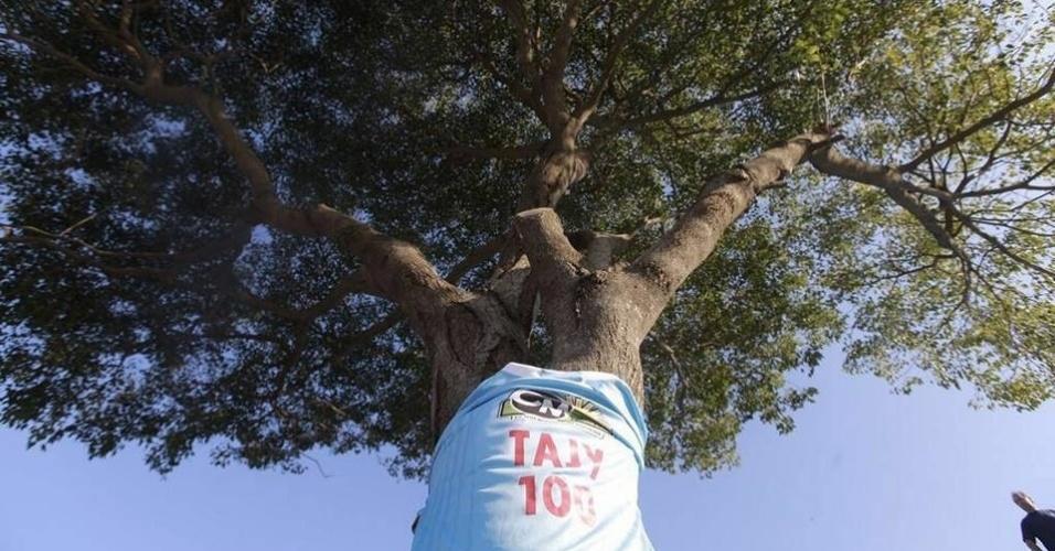 Árvore em arquibancada do estádio Tomás Beggan Correa, em Assunção (Paraguai)