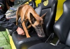 Segurança reforçada para Borussia x Monaco após ato terrorista - AFP